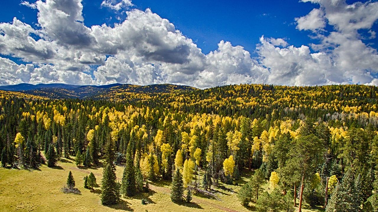 Fall Colors in Pinetop-Lakeside, Arizona slider (image)