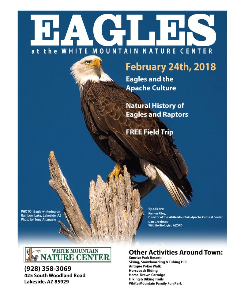 Eagles at the White Mountain Nature Center